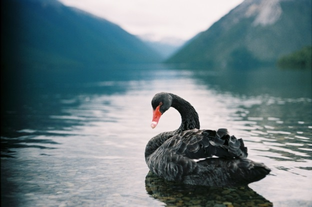 Black swan - Project management