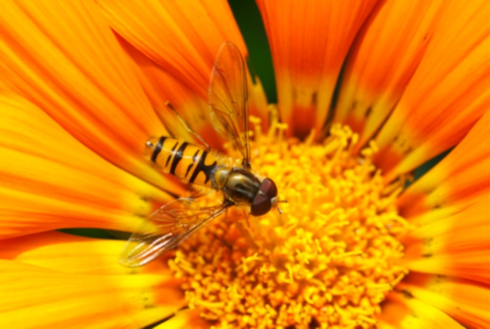 4 Things Project Teams Can Learn from Honey Bees